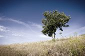 View Of Lonely Tree In A Weadow In The Summer poster