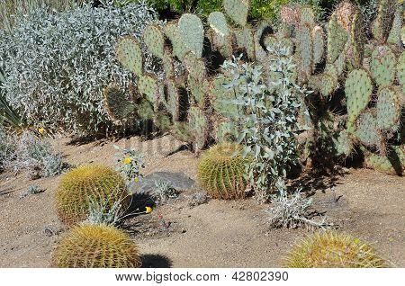 Variety in the desert