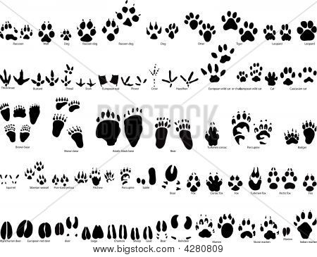 Animals Traces