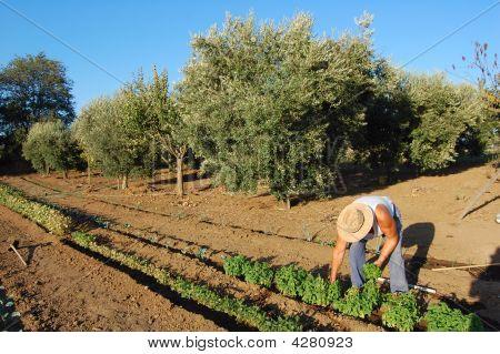 Farmer Working In Large Garden In Summer Field With Blue Sky