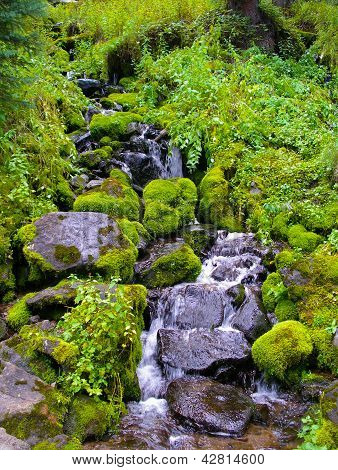 Mossy Rocks Along Creek.