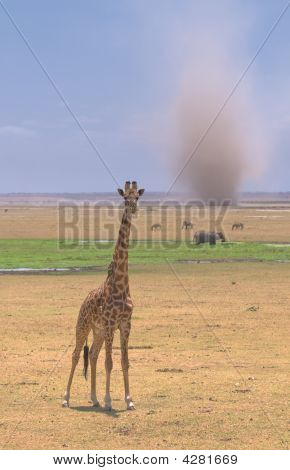 Giraffe And Sandstorm In Amboseli National Park, Kenya
