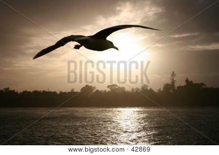 Sea Gull bei Sonnenuntergang