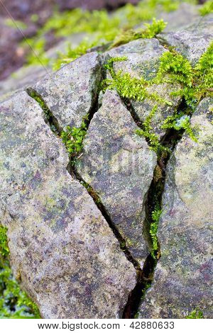 Cracked Moss Rocks