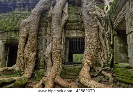 Tree Roots Around Window