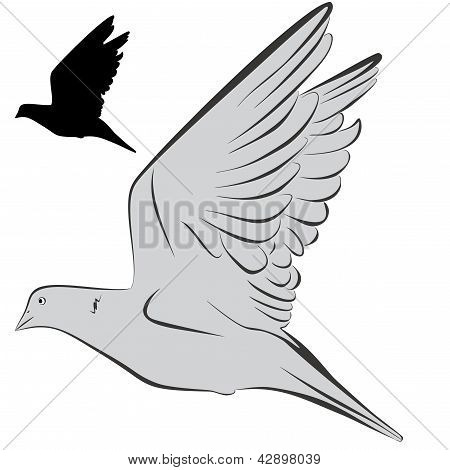 Pigeons (1-re)2-4.eps