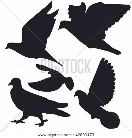Pigeons (1-re)2-9.eps