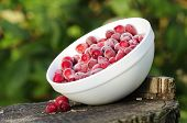 foto of bearberry  - A bowl of large frozen cranberries on a tree stump - JPG