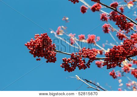 Asberry branch