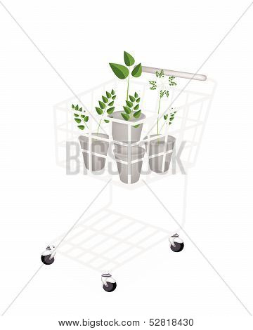 Four Evergreen Plants In A Shopping Cart
