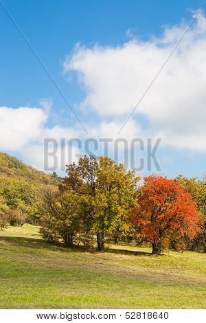 Colorful Autumn Trees