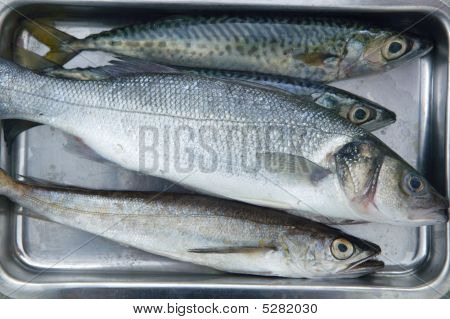 Fish  On Stainless Steel Tray
