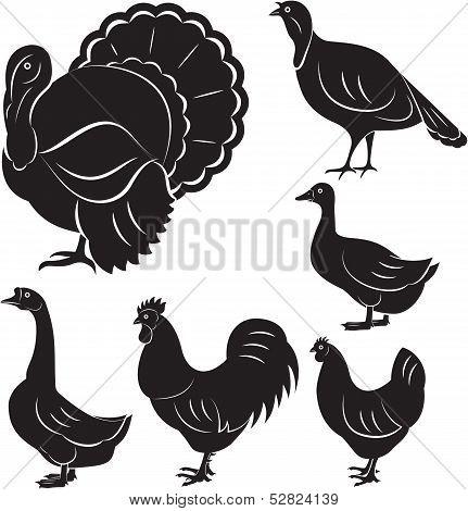 Farm Birds