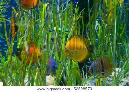 planted tropical  aquarium with fishes