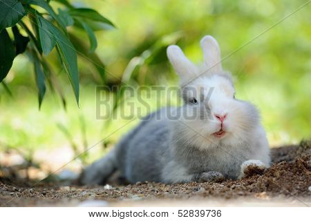 Cute Funny Rabbit Outdoors Lying On The Ground