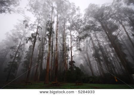 Piquenique à terra na floresta