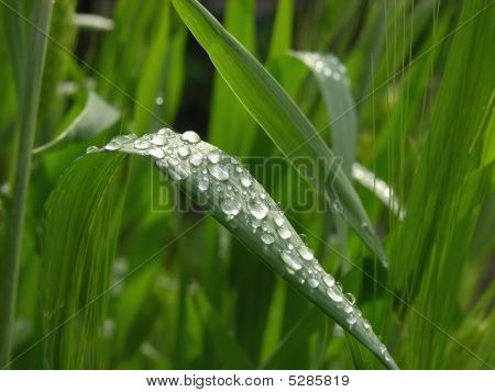 Raindrops_h