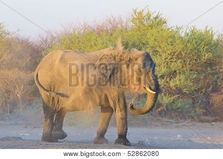 Elephant, African - Wildlife Background from Africa - Sand Bath of Dust and Health