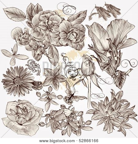 Collection Of Vector Hand Drawn Detailed Flowers For Design