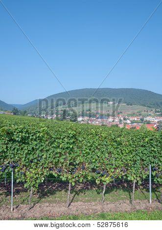 St.Martin,german Wine Route,Rhineland-Palatinate