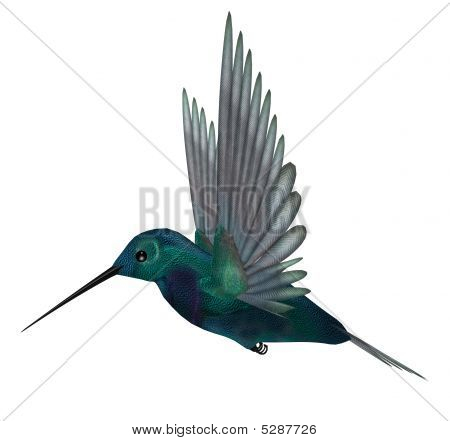 Blue Green Hummingbird