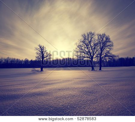 Winter Landscape with Snowy Field and Trees