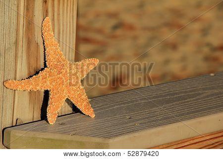 Large starfish on wood railing