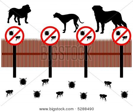 Dogs Behind A Fence To Protect Against Ticks And Fleas