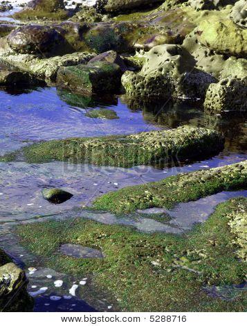 Coastal Tidepools And Mossy Rocks