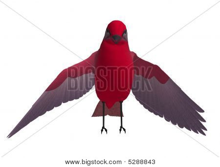 Red Songbird