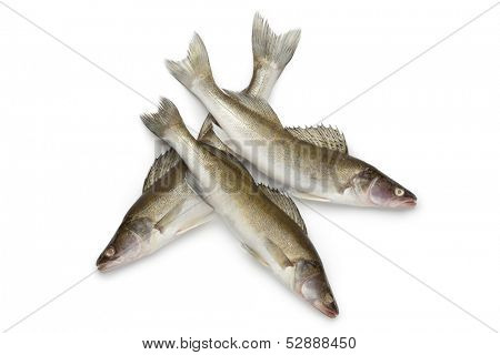 Fresh Zander fishes on white background