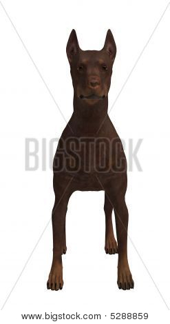 A Brown Dog