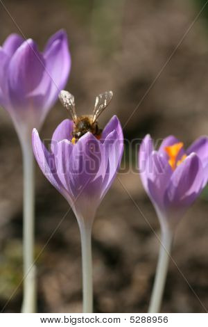 Aroma, Background, Beautiful, Beauty, Bloom, Blooming, Blue, Border, Botanical, Brightness, Climate,