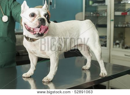 Dog In A Veterinary Office