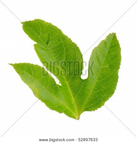 Green Leaf Passion Fruit