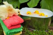 stock photo of baby duck  - Rubber ducks floating in a tub with duck on towel stack - JPG