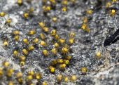 stock photo of baby spider  - Closeup of the Spider nest with hatch - JPG