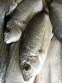picture of sparring  - Small fish Spar ready to be cloked as healthy delicious seafood meal