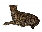 stock photo of ocelot  - Jaguar laying down on a white background - JPG