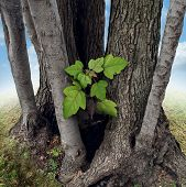 image of safe haven  - Safe investment business concept with a new green sappling being protected and nurtured by larger established trees growing around the budding team member as a financial metaphor for a secure place to invest wealth - JPG