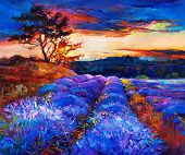 stock photo of fascinator  - Original oil painting of lavender fields on canvas - JPG