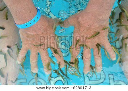 Fish spa skin
