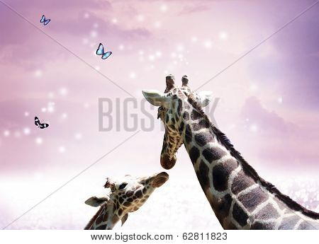 Two Giraffes At Twilight