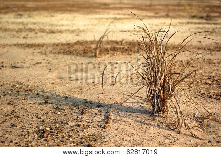 Drying crops