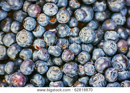 Fresh Blueberries (bilberries) Background
