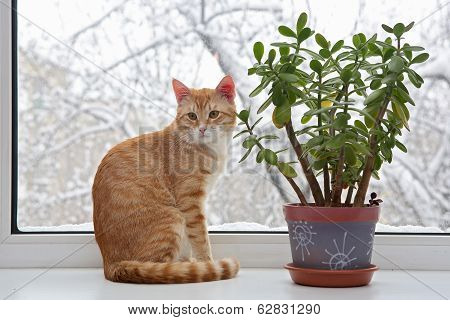 Orange Cat Sitting In The  Window