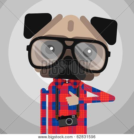 Cute fashion Hipster pug dog pet