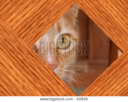 Calico Cat Behind Fence
