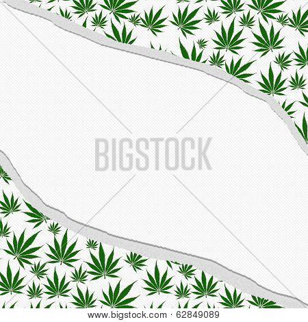 Marijuana Leaves Torn Background