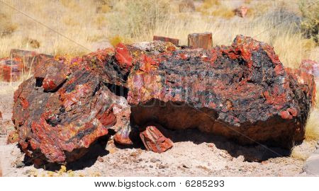 Logs In The Petrified Forest